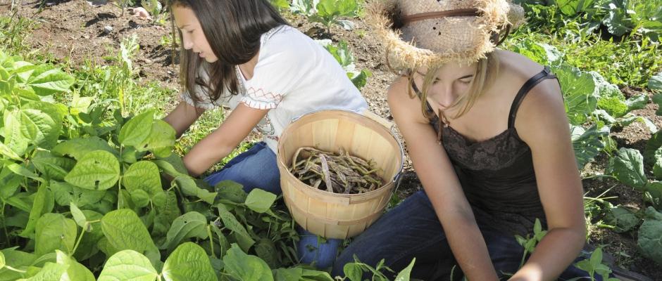 Gartenrundbrief Probeheft online lesen